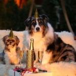 Год Желтой Собаки: как его встречать, чтобы приманить удачу и деньги
