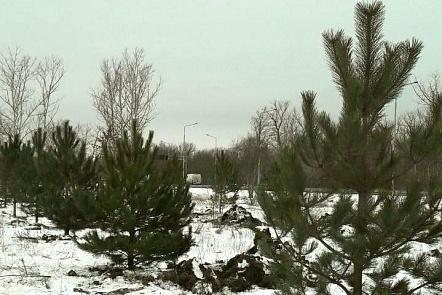 Налевом берегу Дона началась высадка сосен