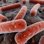 Восемь фактов о туберкулёзе