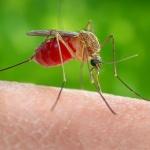 Три совета для жизни без комаров