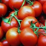Как правильно выбрать помидоры?