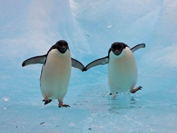 юных лет доброе утро картинки пингвины придерживаться инструкции найти