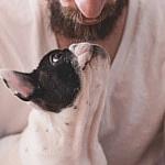 В мужской бороде содержится больше микробов, чем в собачьей шерсти