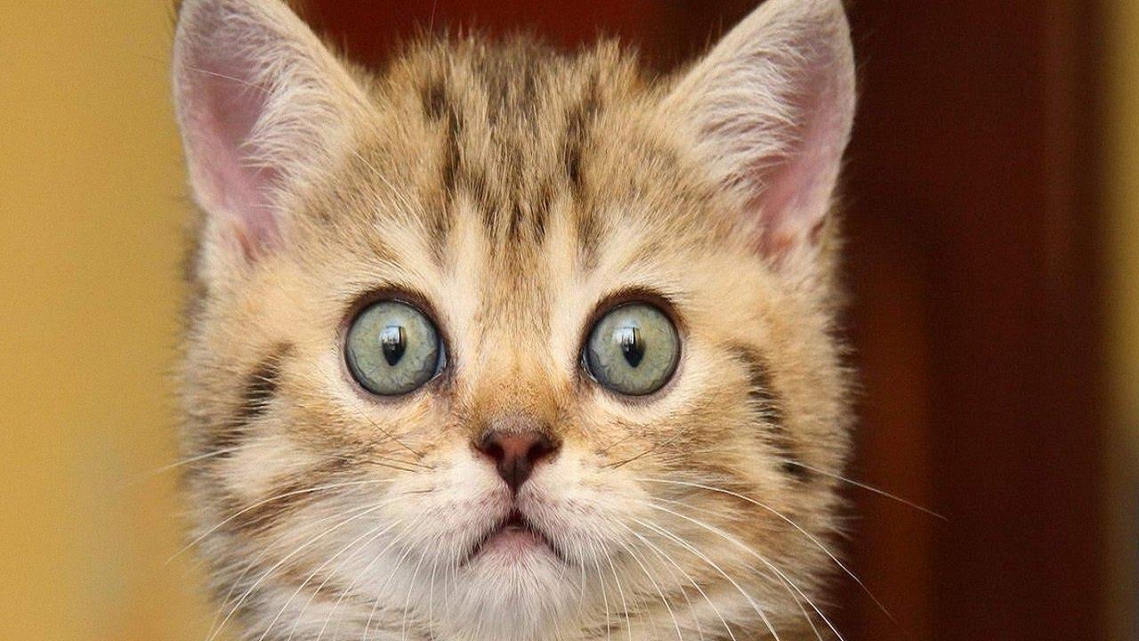 кот напуган картинки строение