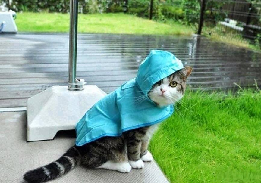 Смешные картинки в дождь, день рождения