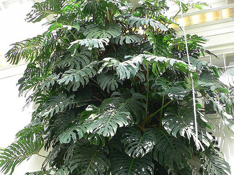 Какие комнатные растения обязательно должны быть в вашем доме